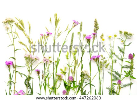 Flat lay of wildflowers on white background. Floral composition. Herbal horizontal border