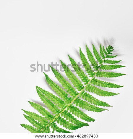 Flat lay. Top view. Frame with flowers, branches, leaves and petals isolated on white background. Fern on a white background