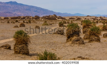 Flat sandy areas with creosote brushes. View of dry hot arid landscape of wilderness. Mesquite Flat Sand Dunes, Death Valley National Park, California