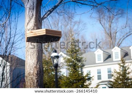 flat tray bird feeder hanging on tree in spring - stock photo