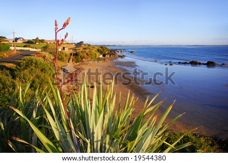 Flax and native grasses overlooking a beach in Riverton, New Zealand - stock photo