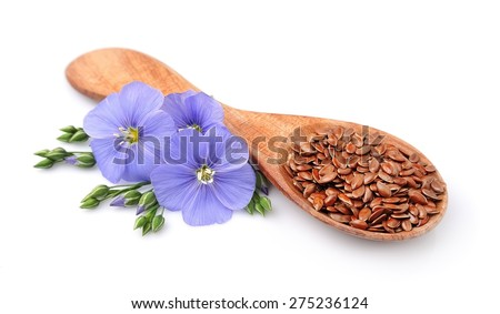 Flax seed and flowers flax close up on white - stock photo
