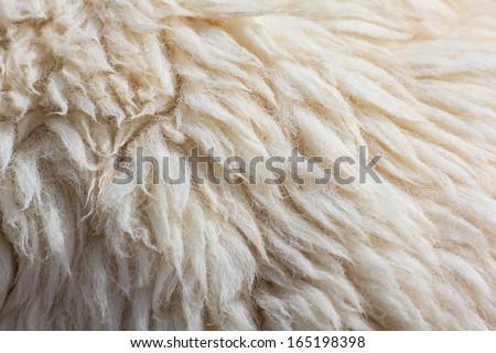 Fleece sheep background - stock photo