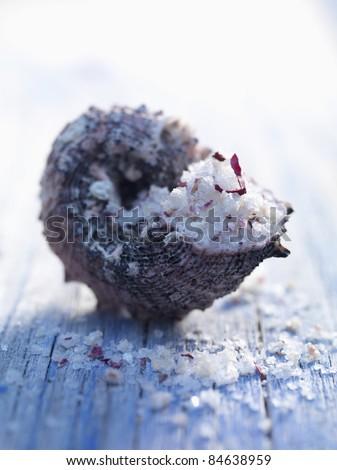 Fleur de sel sea salt in a shell - stock photo