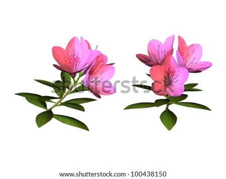 fleurs roses - stock photo