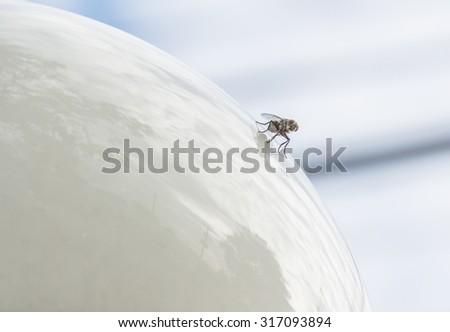 Flies on the lamp - stock photo