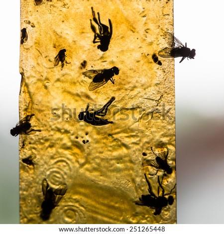 Flies stuck into the flypaper - stock photo