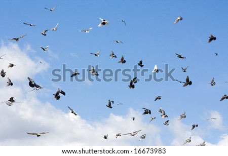 Flight flock of pigeons against the sky