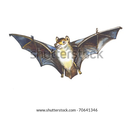 Flight of a bat