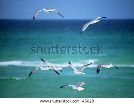 Flight of the Gulls - stock photo