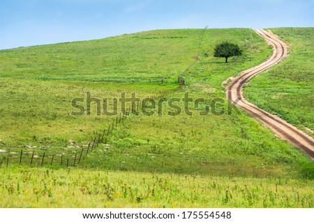 Flinthills Prairie Open Field Dirt Road and Fence with Tree - stock photo