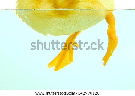 Floating cute duckling close up - stock photo