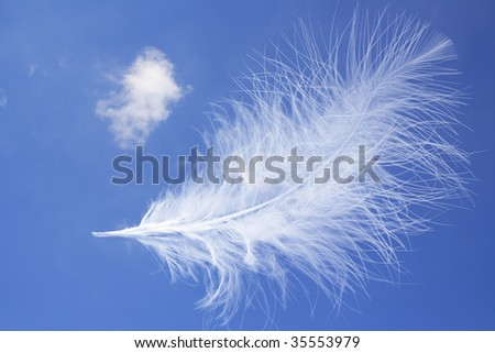 floating feather - montage - stock photo