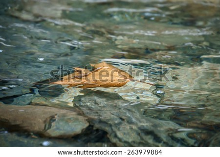 Floating leaf on a creek in Northern Greece.  - stock photo