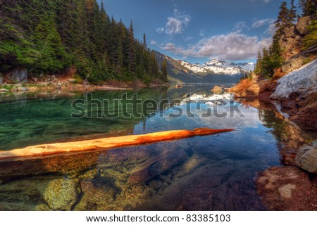 Floating log in pure mountain lake - stock photo