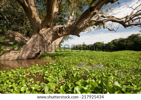 Floating vegetation and tree on an Amazon river - stock photo