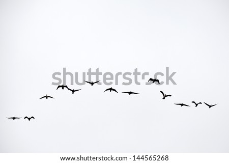 Flock in v shape - stock photo