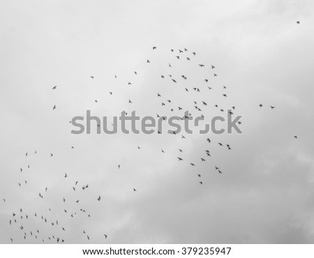 Flock of birds flying high, against a pale sky with few clouds