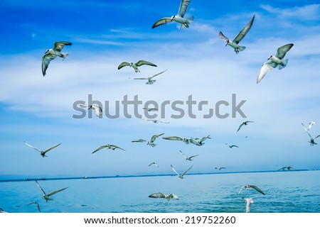 Flock of birds flying in the sky, in the Gulf of Thailand. - stock photo