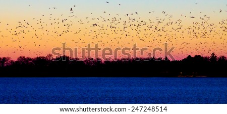 Flock of birds flying into the sunset - stock photo