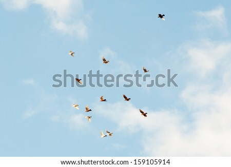 flock of birds in the blue sky with white clouds - stock photo