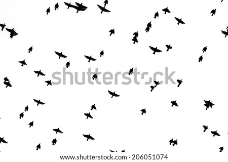 Flock of birds. Isolated on white.