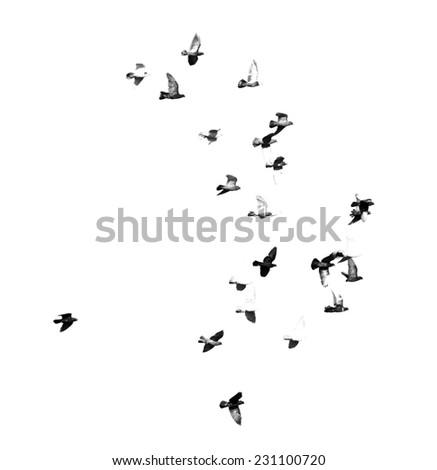 flock of birds on a white background - stock photo