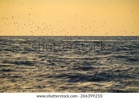 Flock of birds over sea waves at sunset - stock photo