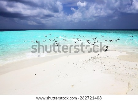 Flock of birds over the idyllic beach of a sand bank - stock photo