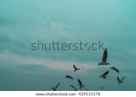Flock of birds seagulls flying in the sky - stock photo