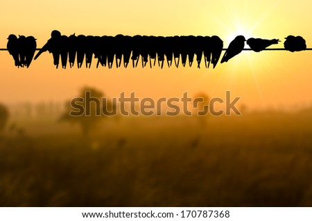 flock of birds stand on power line at morning with sunrise. - stock photo