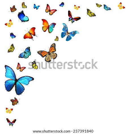 Flock of butterflies - stock photo