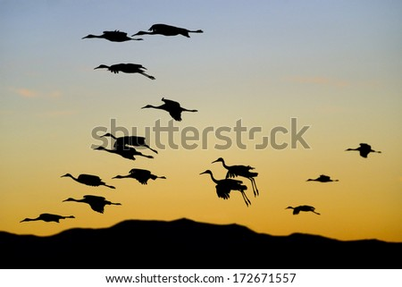 Flock of Cranes at Sunset