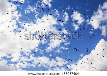 Flock of crows. - stock photo