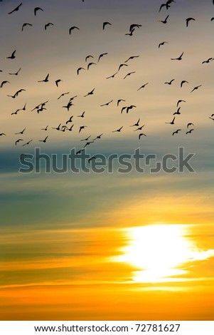 Flock of ducks at sunset over the river - stock photo