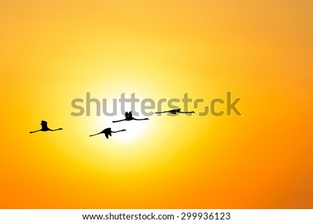 flock of flamingos flying at sunset under a bright sun