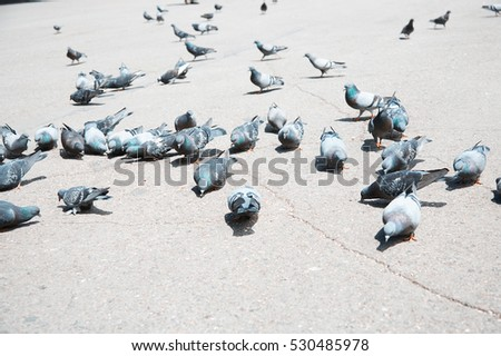 Flock of pigeons on a London street