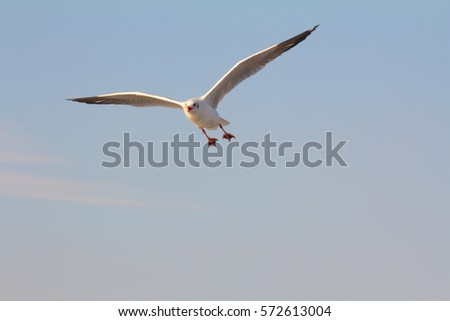 Flock of seagull bird flying on the sea