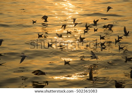 Flock of seagulls at sunrise