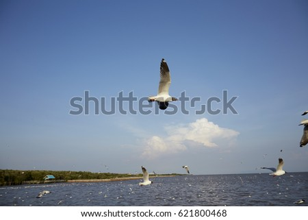 Flock of seagulls fly over sea in Thailand  noise background