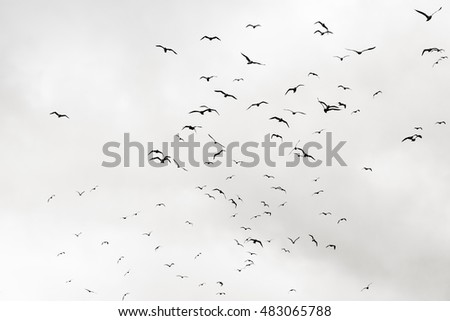 flock of seagulls in black and white