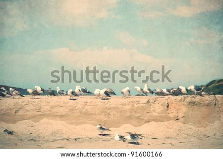 flock of seagulls on the beach, vintage style - stock photo