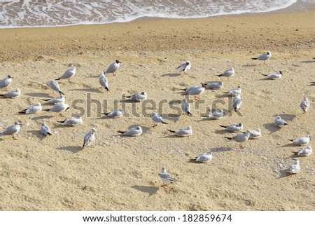 flock of seagulls on the sand