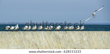 Flock of seagulls sitting in a row on the top of a pier. Copy space.
