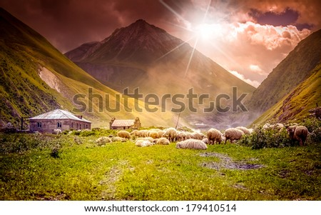 flock of sheep grazing in a mountain valley at sunset - stock photo