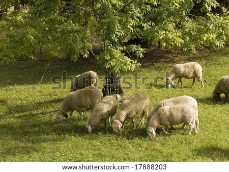 Flock of Sheep in a green meadow - stock photo