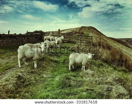 Flock of sheep in the mountains Peak District National Park, England - stock photo