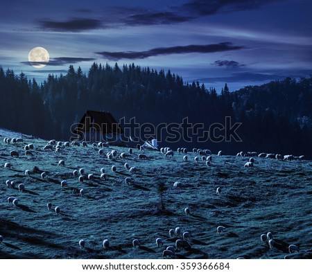 flock of sheep on the meadow on hillside near the fir forest in mountains of Romania at night in full moon light - stock photo