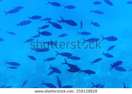 Flock of small fish in the depths of the sea - stock photo