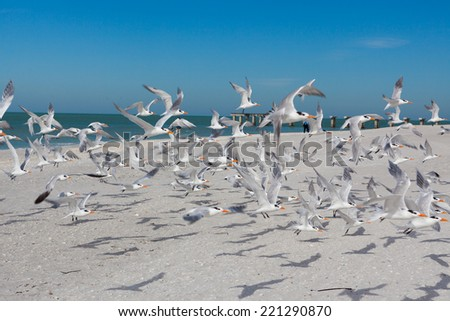 Flock of terns take off from beach